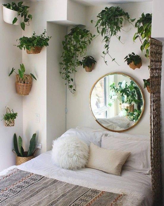 Рослини в домі