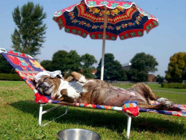 То чувство, когда животные провели лето лучше, чем я