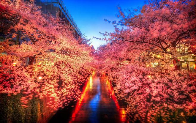 Найбільш весняне свято: О-ханамі в Японії