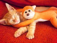 Котэ с игрушкой обезьяны