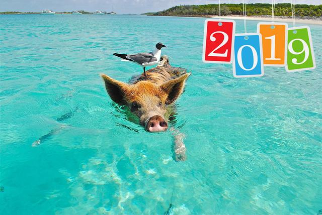 Крутая открытка на Новый год 2019 свиньи