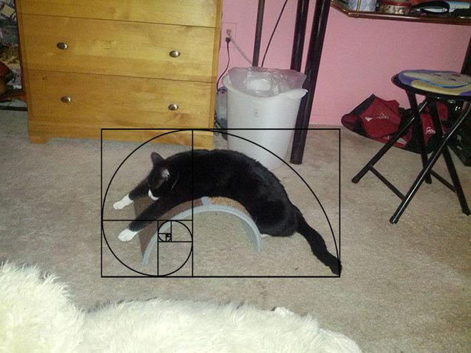 Идеальные коты по числам Фибоначчи
