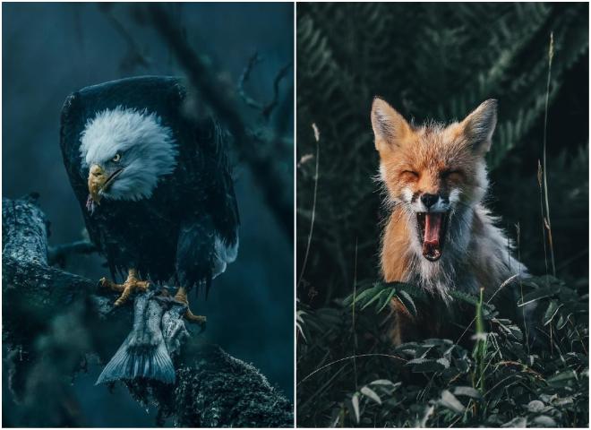 Похмуро красиво: природа на знімках тревел-фотографа Ділана Ферста