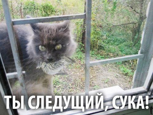 Ухажер моей котэ