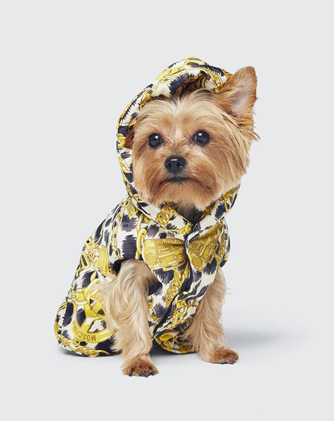 одяг для собак
