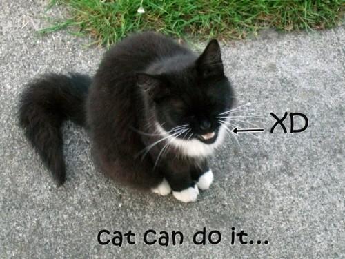 Коты это могут XD