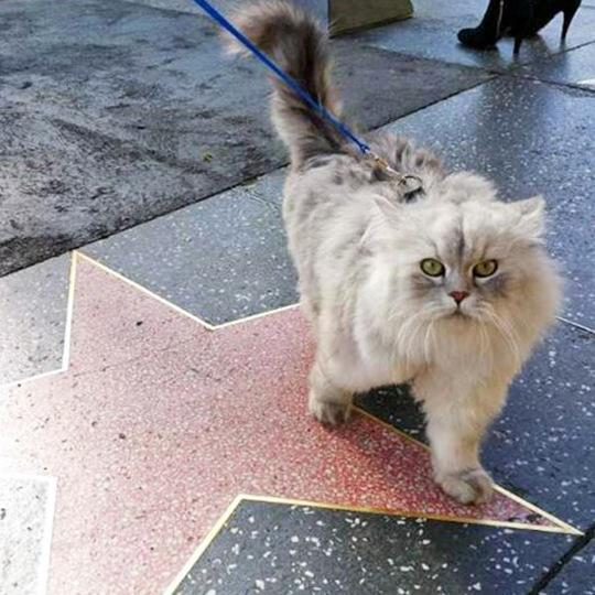 Як подорожує найщасливіший кіт у світі?