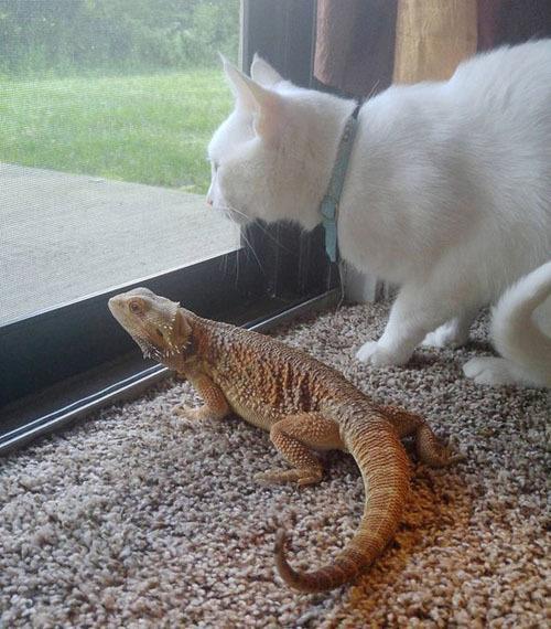 Необычные друзья