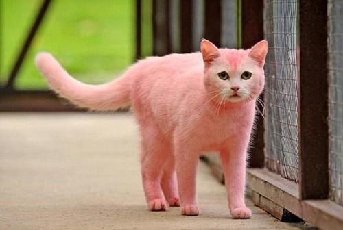 Розовые животные