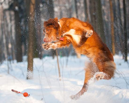 Игры в снегу. Няшки на природе