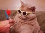 Супер модник кот Фидель
