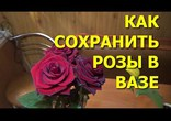 Как сохранить розы в вазе дольше