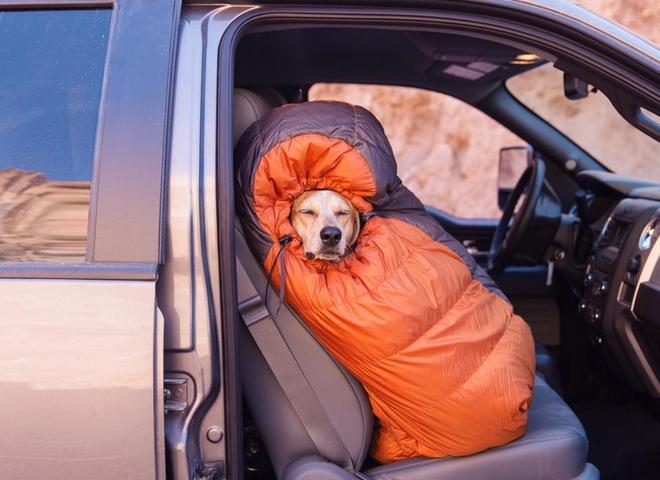 Неймовірні пригоди собаки-мандрівниці Медді по Америці