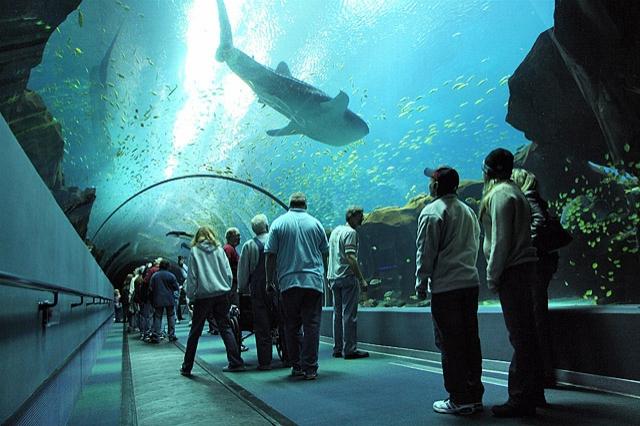 Океанариумы мира: The Georgia Aquarium, США
