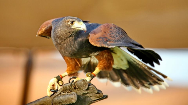 Много жемчуга и соколиная охота: таинственный эмират Рас Аль Хайма (фото)