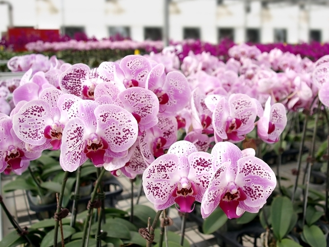 как ухаживать за орхидеями