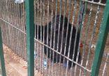 Турция - зоопарк