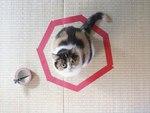Новый интернет-мем: Котики в кругах