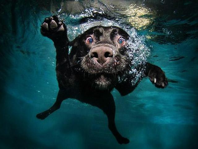 Как ведут себя собаки