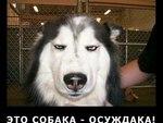 Демотиваторы с разными собачками