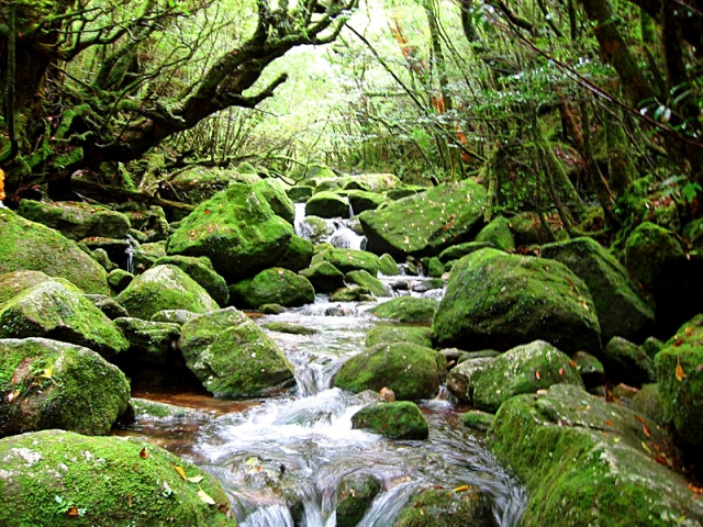 Остров Якусима: волшебство нетронутой природы
