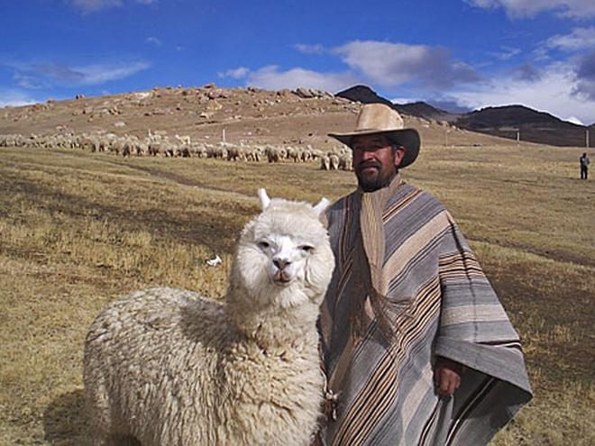 http://s0.tchkcdn.com/g2-bSebs3Jt1yZPJRgDeXMbKQ/travel/660x495/f/0/1-1-7-3-11173/bolivian_alpaca.jpg