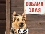 Милое фото с собачкой