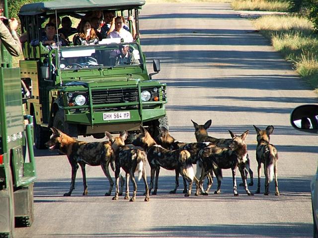 Національні парки світу: Національний парк Крюгер
