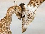 Родительская любовь в животном мире