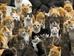 Аошима: остров кошек
