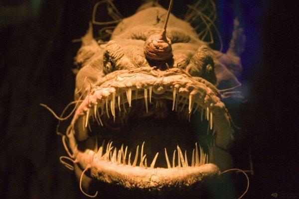 Глубоководный удильщик или морской