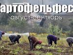 Картофельфест на всех огородах страны