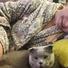 Наташа Королева без макияжа выставила постельное фото с котом