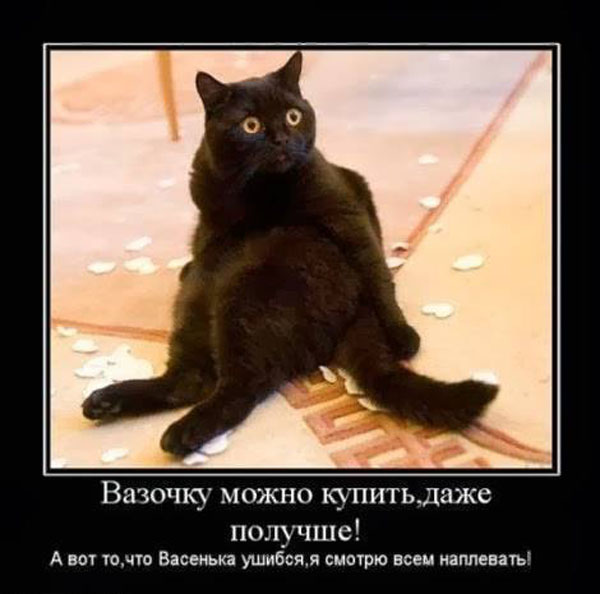 демотиваторы про кота хозяин это я твой кот