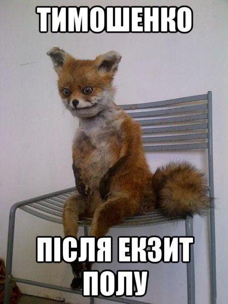 Тимошенко после Экзит пола