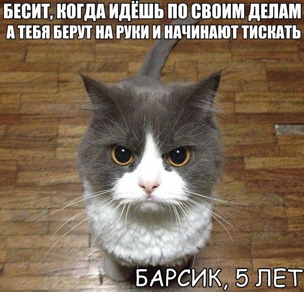 Прикольный мем с котиком