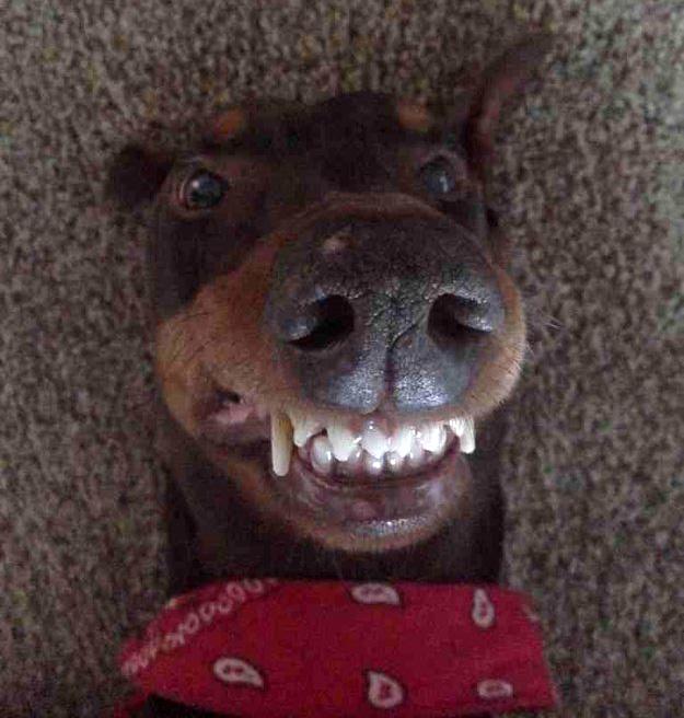 ТОП 13 самых популярных селфи собак