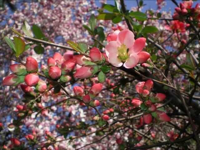 А за окном весна