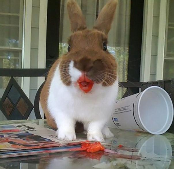 Няшки кушают клубничку. Слабонервным НЕ смотреть!