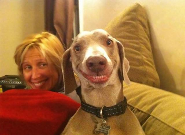 Собаки, которые поднимут настроение