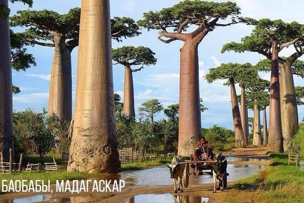 Сказочные деревья на нашей планете