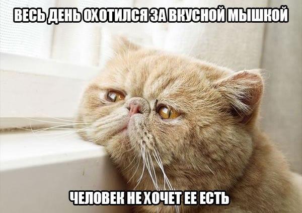 Проблемы котов