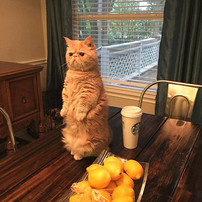 Кот Джордж думает, что он человек