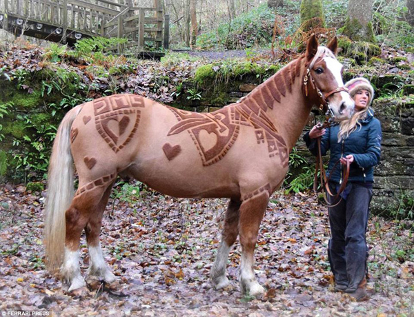 Уникальные лошади с дизайнерскими узорами