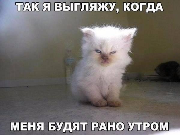 """Мое """"довольное"""" лицо по утрам"""