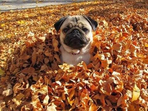 Пора бы уже сфоткаться в листьях для аватарки