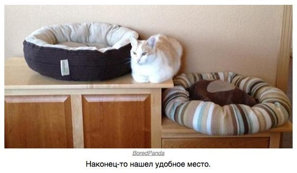 Логика, понятная только котам