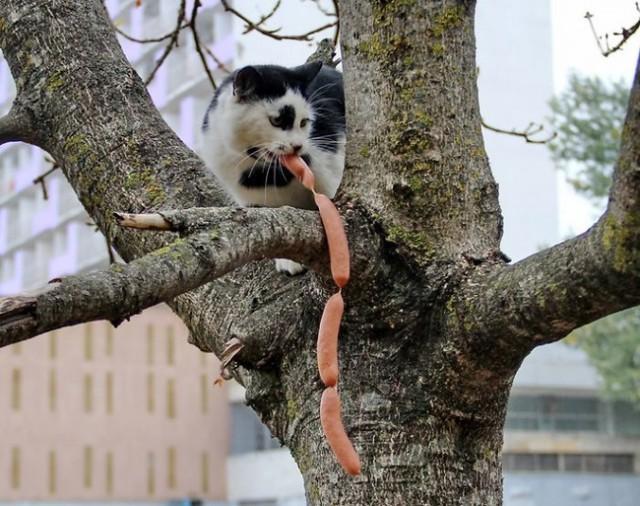 ТОП 14 котов-воришек