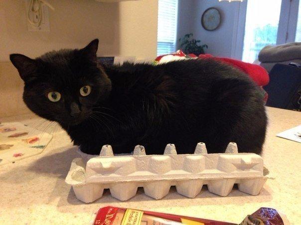 Коробки и коты - вечная любовь!