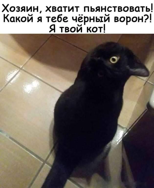 Ворон или кот?